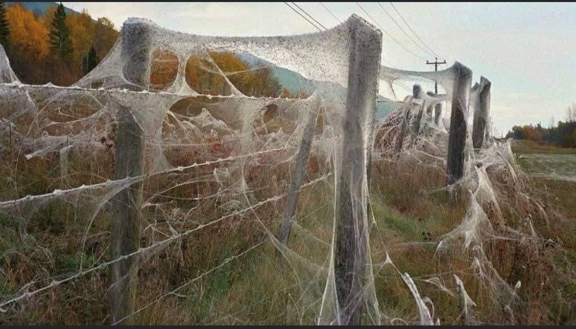 Города Австралии утопают в паутине: что известно (ФОТО)  - фото 4