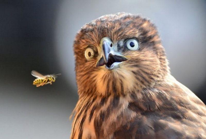 Неповторимые животные, которые научат вас удивляться (ФОТО) - фото 4
