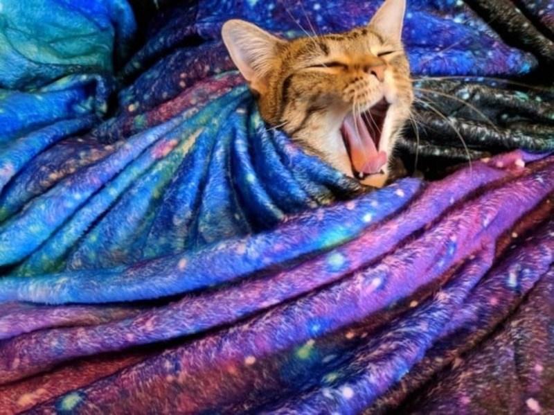 Кошки - правдивые фото, в которых отражена вся суть их натуры  - фото 18