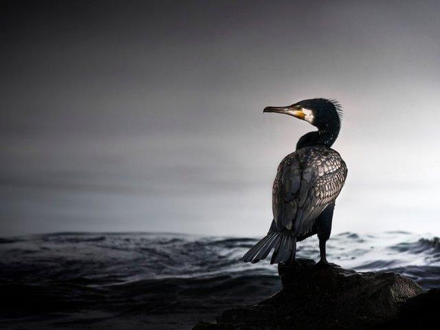 Неповторимый момент: лучшие фотографии природы за последние 10 лет  - фото 10
