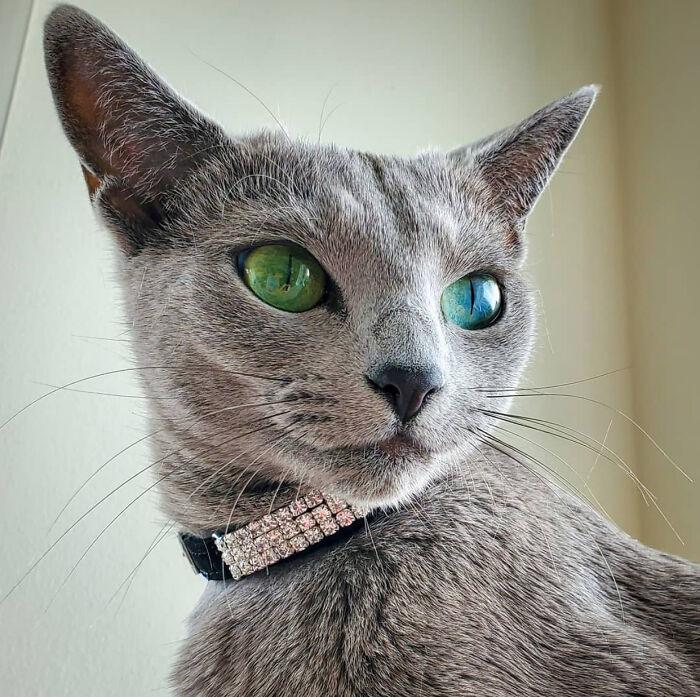 Семнадцать фото кошек, которым впору работать в модельном бизнесе  - фото 3