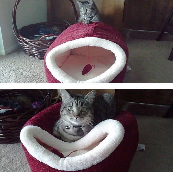 15 фото кошек, которые не оценили подарков от хозяев - фото 5