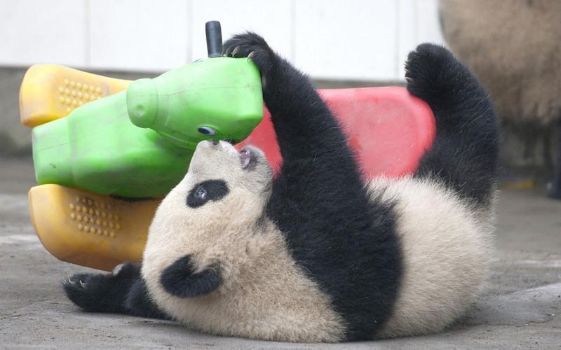 Для хорошего настроения: подборка фото забавных зверюшек со всего мира - фото 15