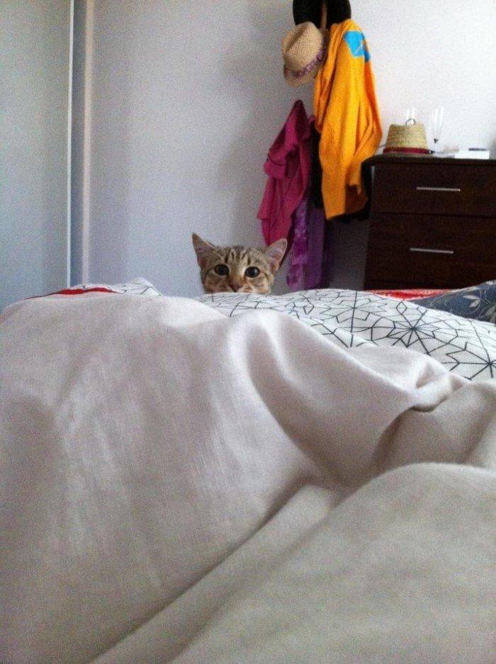 Когда кошки - главные в доме (Позитивные фото) - фото 2