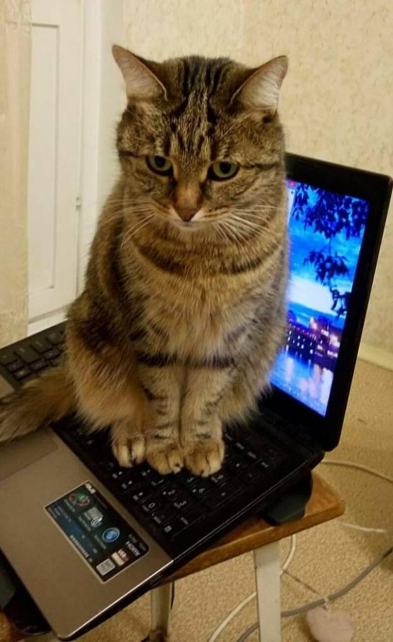 Кошки - правдивые фото, в которых отражена вся суть их натуры  - фото 3