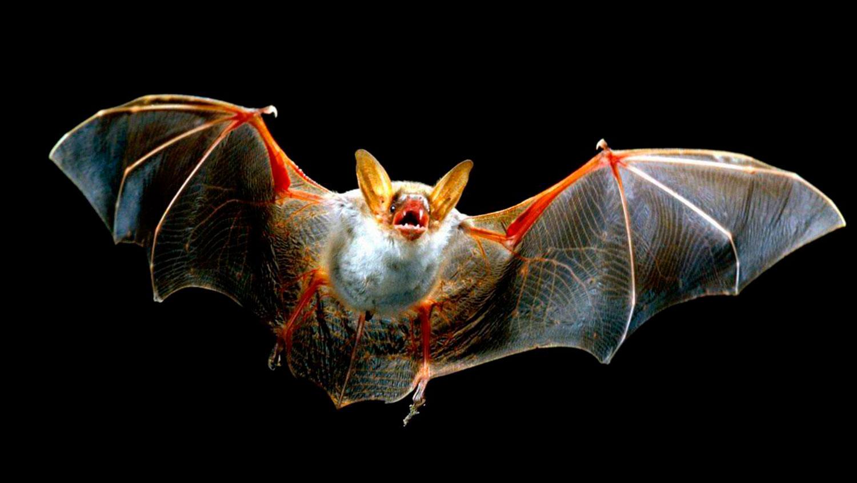 Вирусолог назвал самых опасных животных, которые могут спровоцировать новую пандемию - фото 2
